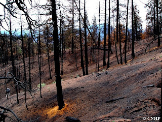 Hayman fire high intensity burn area