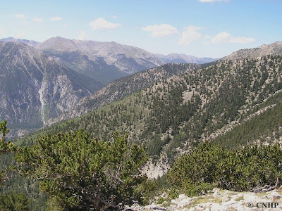 Mount Princeton Potential Conservation Area