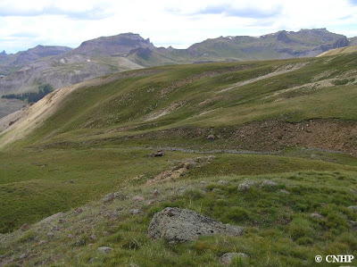 Alpine Tundra in Hinsdale County, CO