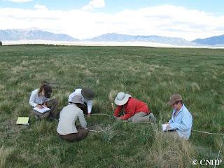 Wetlands field crew