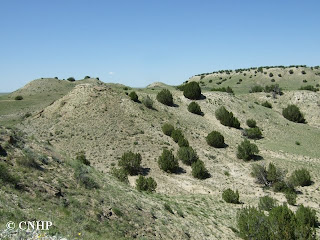 Shale barrens with juniper