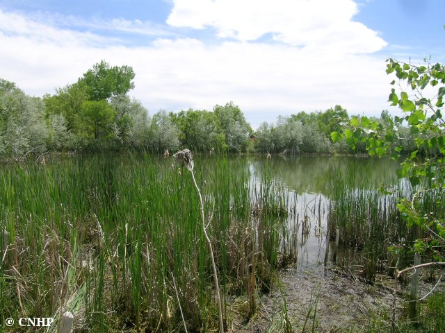 CNHP Blog: Groundtruthing wetland mapping