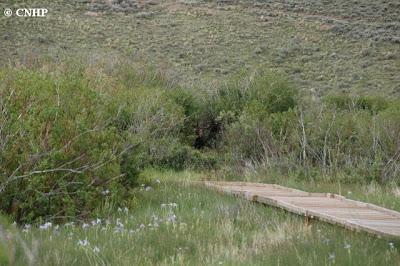 spot the moose