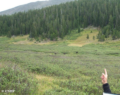 pointing at far away moose