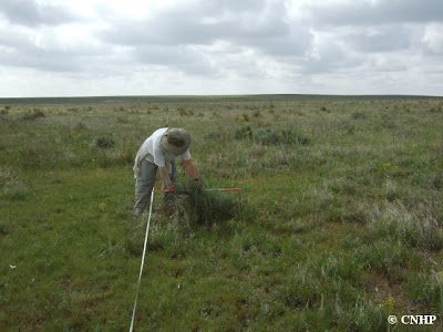 taking a density measure of sand sagebrush