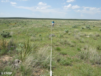 low density transect