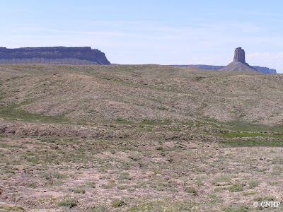 example of salt shrub