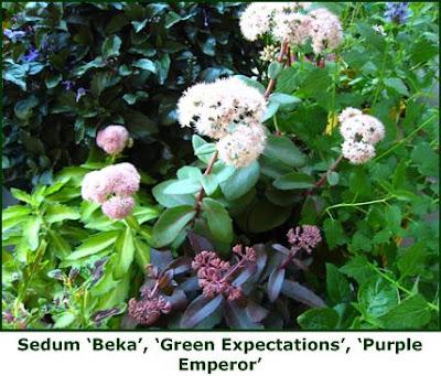 Defining your home garden and travel sedum tips gardening in a pinch sedum tips gardening in a pinch altavistaventures Images
