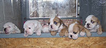 ............Puppies............