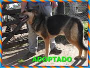 CHESTER ADOPTADO!!!