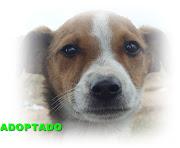 ALEXIS ADOPTADO!!!!