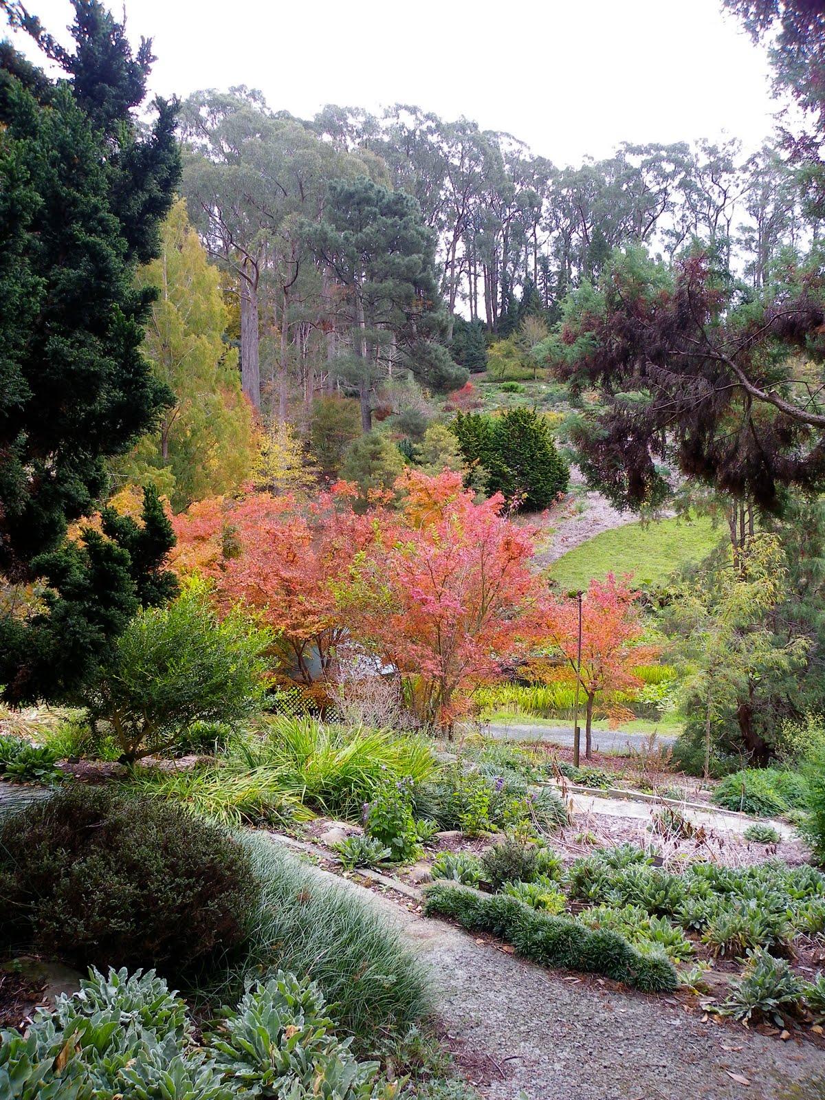 Cee Lew Autumn In Mt Lofty Botanic Gardens