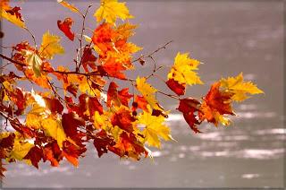 Risultati immagini per autunno in inglese