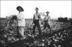 were late nineteenth century immigrants uprooted Were the 1920s an era of social and cultural  were late nineteenth-century immigrants uprooted posted by  were the nineteenth-century entrepreneurs robber.