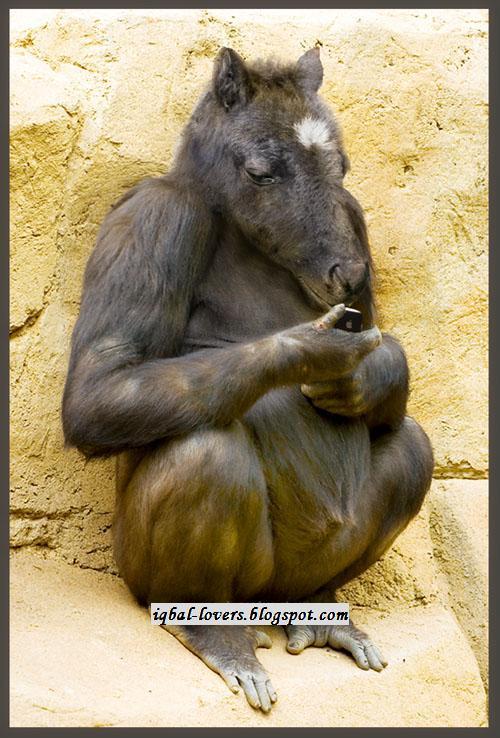 Binatang Kawin http://iqbal-lovers.blogspot.com/2010/12/hasil-kawin ...