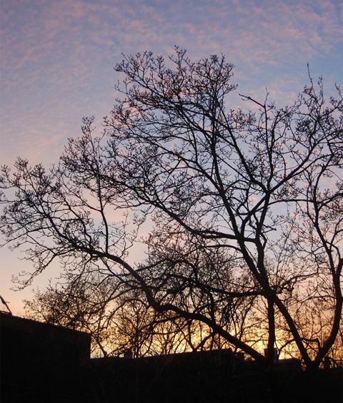 [winter-sunset]
