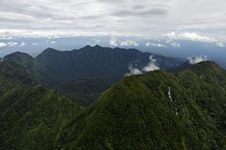 Beberapa Penemuan Species Baru Haiwan Liar Di Mount Bosavi Papua New Guinea