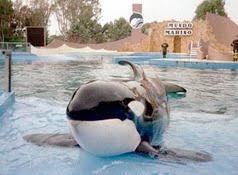 San Clemente del Tuyú Sclem_orca