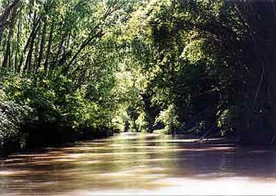 Imagenes del Delta del Paraná Delta_01