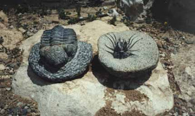 Fósiles Fosil_01