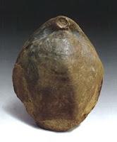 Braquiópodos fósiles Braq_03