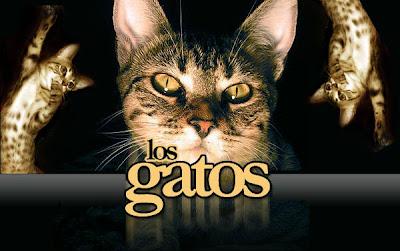 Portal de las Mascotas Gatos