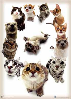 Razas de Gatos Razagatos