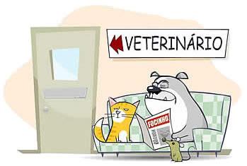 Sanidad del gatito 20060529131849-veterinario2