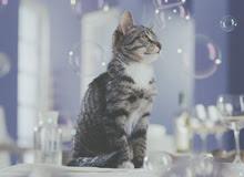 Corte de uñas en gatos 03_220x160_a