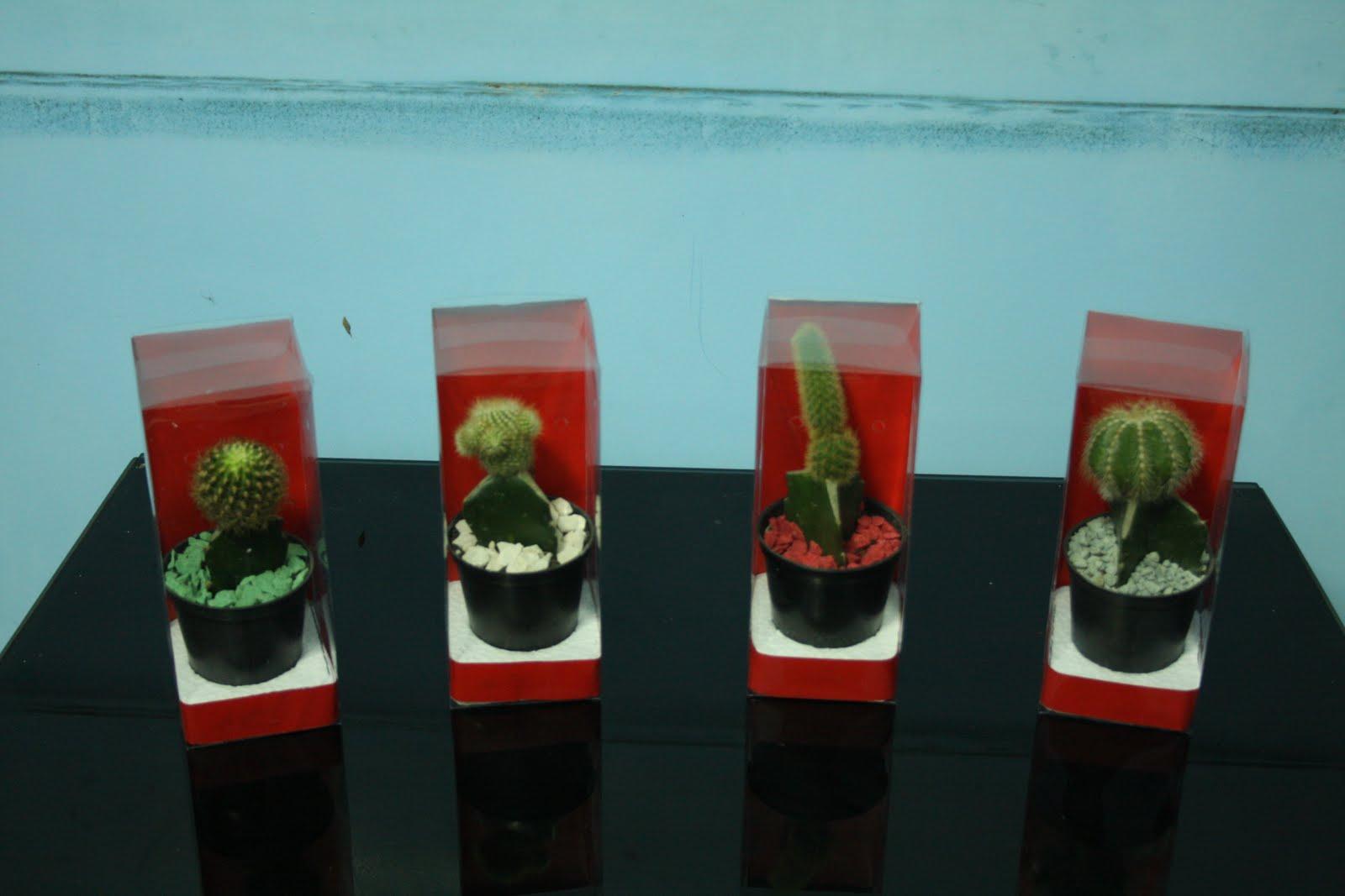 Souvenir Kaktus Mini Harga : Rp. 6.000,- s.d. Rp. 9.000,- / pcs