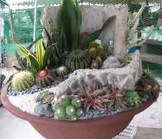 Pinoy Horticulture Cactus Succulent Society of the