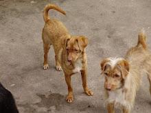 Canela y Lupita adoptadas
