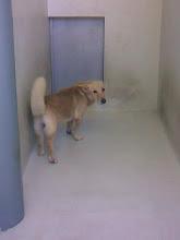 Petiso adoptado