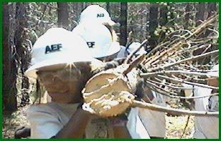 AEF Junior Rangers