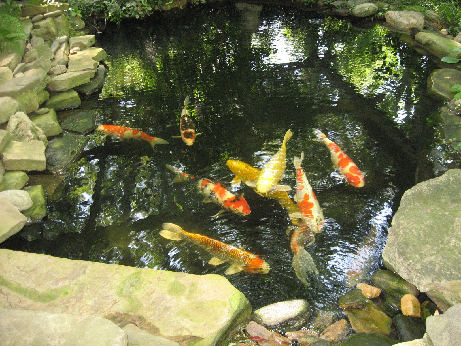 Koi pond car interior design for Koi water garden