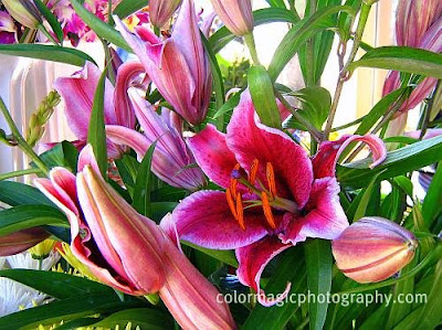 Beautiful bouquet of lilies
