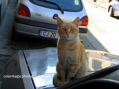 Cat on top of the car