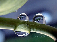 Three raindrops-one macro scene