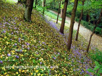 Autumn crocus in the forest