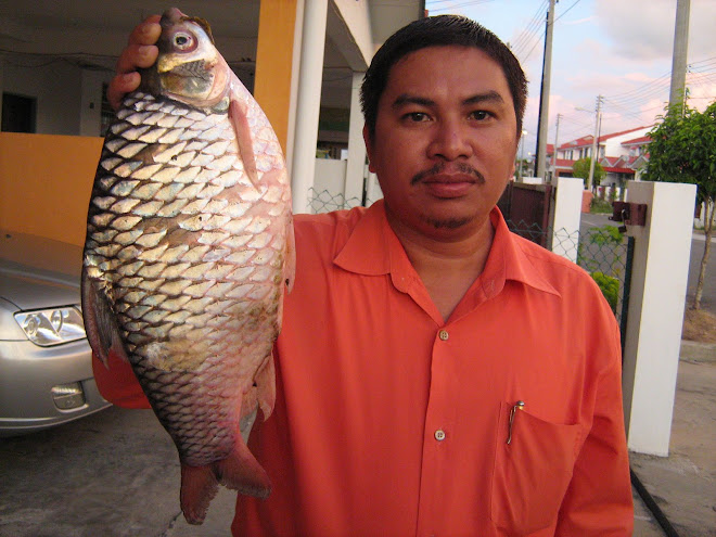 Lampam Sg.Bongawan (3.2 kg)