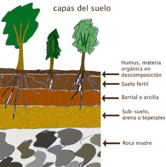 Agrofuturo el suelo ysus propiedades for El suelo y sus capas