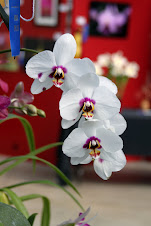 Virginia Orchid Society Show
