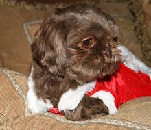Mocha in her Santa Dress