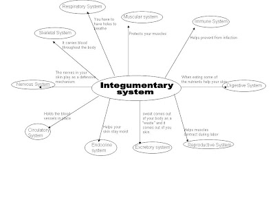 Stevens Anatomy: Integumentary System Graphic Organizer
