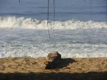 Paz entre las olas