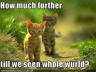 This is a Lolcat