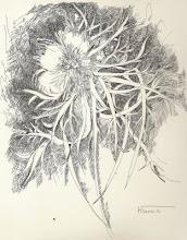 DIBUJO A PLUMILLA- Medidas 32 x 24 cm.