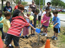 Tree Planted in Sierra's Memory