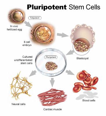 cell membrane diagram. +cell+membrane+diagram