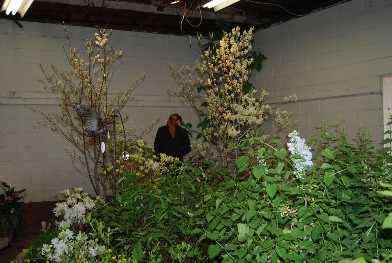 Skillin\'s Garden Log: March 2010